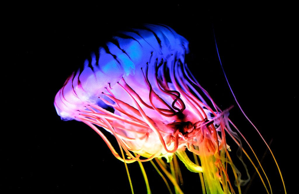 Multicolore 4